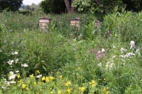Bee Hives and Wild Flowers at Hidcote
