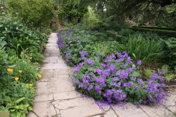Allow geraniums and flowering plants cascade onto paths
