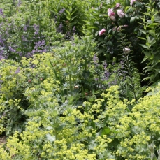 Try a mixed border with roses, tall perennials, summer bulbs and low growing plants