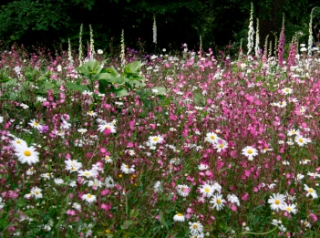 Foxgloves and wildflowers at Hidcote