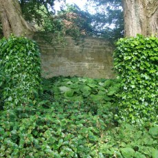 Trim the ivy to show a deliberate design statement