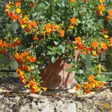 Grow one beautiful plant in a terracotta pot