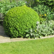 Edge beds next to lawn with a paved mowing strip