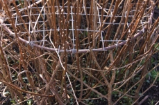 Provide sturdy support for tall plants with twiggy prunings