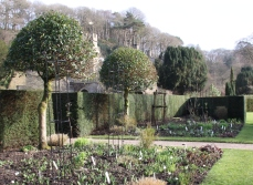 Add height to your borders with a small tree or climbers