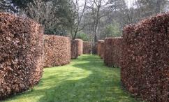 Serpentine Beech Hedge