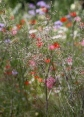 Colourful flowers and grasses in the Wildflower Garden