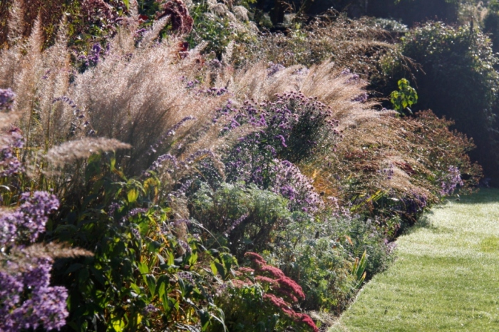 Grasses and Asters in October