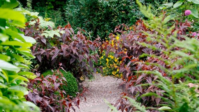 Bluebell Cottage Exotic Garden