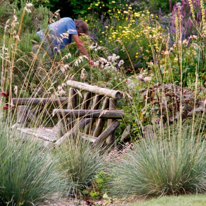 Bluebell Cottage Grasses